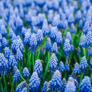Pflanzkübel zum Frühlingsanfang