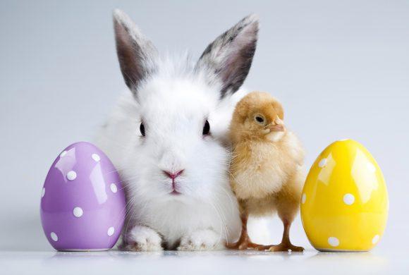 Ostereier und andere süße Überraschungen